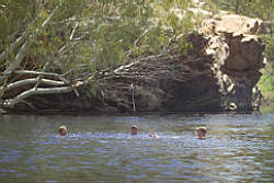 Whistleduck Waterhole